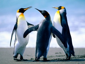 Dancing penguins are funny